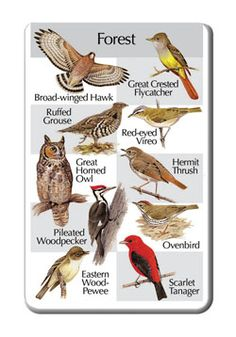 Birds of the Forest        Broad-winged Hawk      Ruffed Grouse      Great Horned Owl      Pileated Woodpecker      Eastern Wood-Pewee      Great Crested Flycatcher      Red-eyed Vireo      Hermit Thrush      Ovenbird      Scarlet Tanager    Please note: This songcard requires a Birdsong Identiflyer (#424a) in order to play songs.
