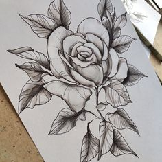 Rose tattoo sketch by Family Ink