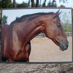 Bay Horse Head Shoulders Picture Card by CardstockEquine on Etsy, $3.50