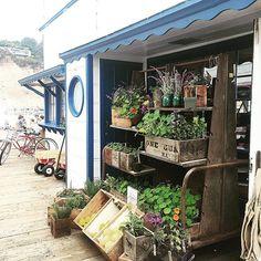 Sweetest farmstand at @malibufarm on the Malibu Pier - AND great farm fresh organic food #roadtrip #california #beach #beachlife #ocean #coast #napa #sanfrancisco #sanluisobispo #pismobeach #santabarbara #montecito #malibu #losangeles #lagunabeach #live #love