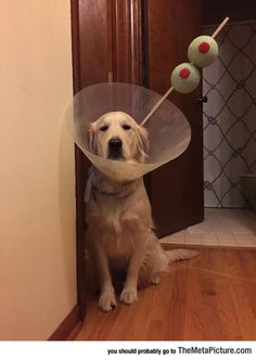 Dogs sure put up with a lot from us. Hang in there . . . one day, after years of therapy, this will be a distant memory.