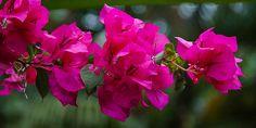 paradiesische Blumen Bangkok, Thailand, Plants, Flowers, Plant, Planets
