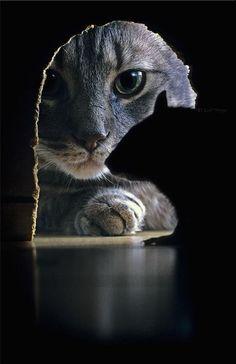 Chat qui chasse la souris je ne penssais pas que sa aurais pu gaire une si belle photographie !