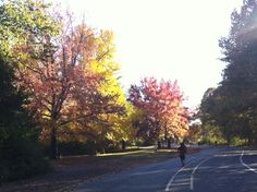 Autumn in Prospect Park! Prospect Park, Peaceful Places, Long Island, Brooklyn, Country Roads, Autumn, York, Nature, Life