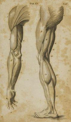 brazo y pierna