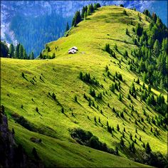 Mountain meadow, Val Di Fassa, Italy. That's cool.
