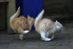 Speed kitties!
