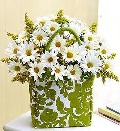 Daisies ~ My favorite flowers <3