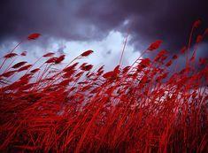 рыжие цветы природы колор: 19 тыс изображений найдено в Яндекс.Картинках