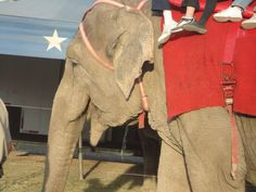 elephantt!!