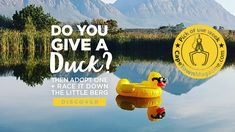 Adopt a duck and race it down the river to help raise funds for CHAIN Animal Welfare. The more ducks you adopt, the higher your chances to take home R5000 too. Dress up for a day at the races, fitted with your gumboots, at the Day At The Duck Races on Saturday 14 September 2019.
