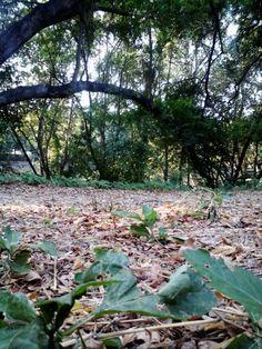 Salasatu kawasan hutan mangrove di jakarta utara...