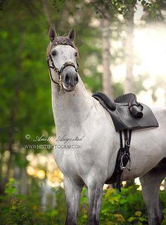 Hestefotograf.com - Equine Photographer | Horses 3