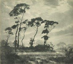 Harold Cazneaux, An image of winter's light, 1923-1926, bromoil photograph, 24.7 x 28.3 cm