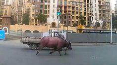 Video: la violenta cacería de un toro por las avenidas de China | China, Videos, Corrida de toros, Animales salvajes, Sociedad - América