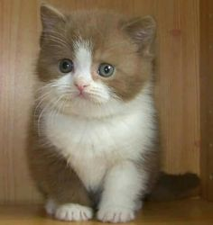 PRETTY KITTY ♡
