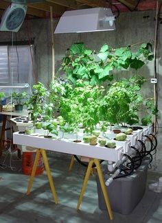Hydroponic Gardening for New Beginners_16
