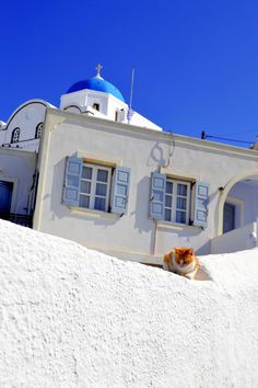 Cat in Pyrgos Village, Santorini