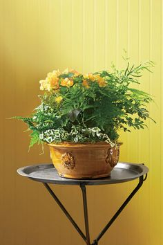Rely On LeavesIndoor Container Gardening IdeasGardens
