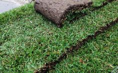 Installation of your lawn - How to guide - Putting down your instant turf | Lilydale Instant Turf | Love your lawn | Great grass | Lily & Dale | Follow us | Garden Tips & Advice | Contact us | Lawn Solutions Australia