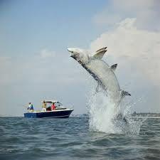 Tarpon fishing...is great off the Hernando County Florida coast.