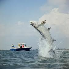 Tarpon fishing...