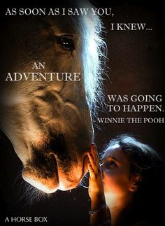 I never really knew confidence until I found horses. I never knew how incredibly sensitive horses are to their surroundings. I have such admiration, respect and love for the horses I work with at the rescue ranch. I wish everyone could feel this amazing c Inspirational Horse Quotes, Horse Riding Quotes, Horse Love Quotes, Equestrian Quotes, Horse Rescue, All About Horses, My Horse, Horse Tack, Horse Pictures