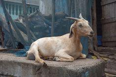 Undiscovered Mumbai Neighbourhood: Koliwadi