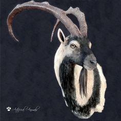 Fake taxidermy. Ibex bezoar artificial  (Capra aegagrus) Fauna, Taxidermy, Mammals, Goats, Animales, Goat