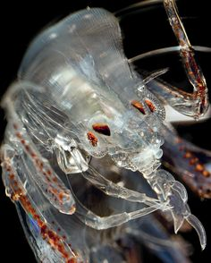 Monster in a Barrel, Spooky Ocean Drifters - Science Friday Deep Sea Creatures, Weird Creatures, Micro Photography, Nature Photography, Ocean Food, Sci Fi Thriller, Bugs And Insects, Animals Of The World, Ocean Life