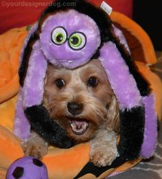 Eeeeep! There's a spider on Sadie's head! Good thing it's Halloween when everything creepy is fun for a day.