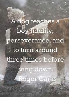 423 Best Dog Quotes And Proverbs Images Dog Supplies Dog Cat