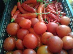Paradicsom tejjel permetezése - gazigazito.hu Vegetables, Gardening, Ideas, Plant, Lawn And Garden, Vegetable Recipes, Thoughts, Veggies, Horticulture