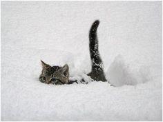 Aww, winter kitty