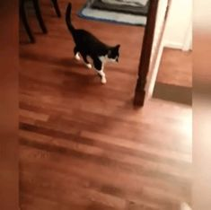 GIF You want to attack me?