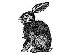 Hare by Sam Dunn #Design Popular #Dribbble #shots