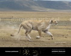 feline prehistoric wildlife - Google Search