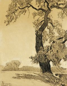 The Oak Tree   Maynard Dixon   Charcoal on paper   The Coeur d'Alene Art Auction