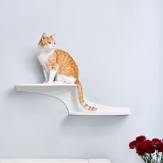 @Overstock - On The Refined Feline Cat Clouds Cat Shelf, cats appear to floating on clouds along your wall space. Let them lounge on super strong metal platforms with soft comfortable pads covered in faux sheepskin fabric.http://www.overstock.com/Pet-Supplies/The-Refined-Feline-Cat-Clouds-Cat-Shelf/5216179/product.html?CID=214117 Add to cart to see special price