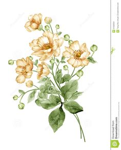 watercolor-illustration-flower-set-simple-white-background-51532034.jpg (1043×1300)