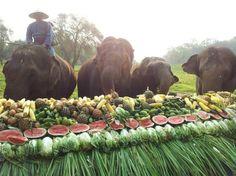 #statusresponsavel no Four Seasons na Tailândia. Elefantes resgatados de maus tratos agora têm vida de hóspede!