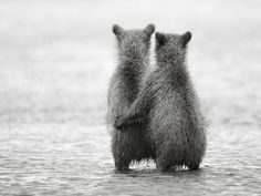 Two year old sister and brother cubs are waiting alone for their mom to return from salmon fishing. Pic by Nikolai Zinoviev as seen on National Geographic.