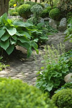 {<3} stone path through the shade garden...