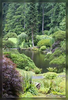 An awesome 2 mile trek called Bloedel Reserve on Bainbridge Island. Anybody for a fieldtrip???