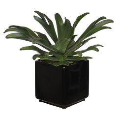 House of Silk Flowers Artificial Staghorn Succulent Desktop Plant in Planter & Reviews   Wayfair