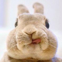 Such a cute bunny Cute Baby Bunnies, Funny Bunnies, Cute Little Animals, Cute Funny Animals, Fluffy Bunny, Tier Fotos, Cute Animal Pictures, Cute Creatures, Animals Beautiful