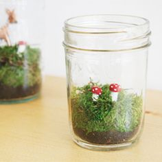DIY Faux Terrariums.... perfect for those of us without green thumbs!