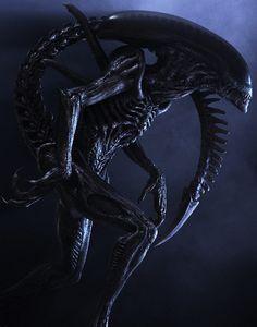 Aliens and Predators : Photo
