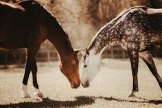 Beautiful Horse Pictures, Beautiful Horses, Cute Horses, Horse Love, Equine Photography, Wildlife Photography, Dapple Grey Horses, Majestic Animals, All The Pretty Horses