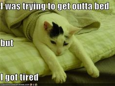 Fibromyalgia Memes That Might Make You Laugh - Fibromyalgia Resources I Love Cats, Cute Cats, Funny Cats, Funny Animals, Cute Animals, Baby Animals, Funny Shit, The Funny, Funny Memes
